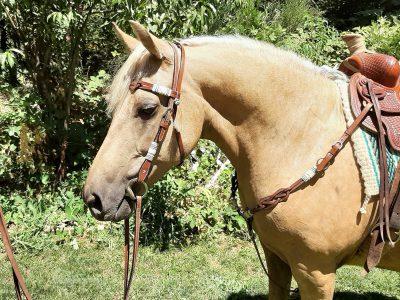 View Richwood Mustang Sally